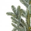 Stock Photo: Fir tree branch on a white background.