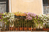 Flowers balcony — Stock Photo