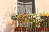 Flowers balcony — Stock Photo