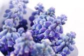 Springs flowers — Stock Photo