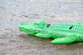 Green floater crocodile in the water — Stock Photo