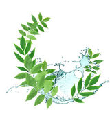 Leaves And Water — Stock Photo