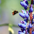 Bumblebee Near Flower — Stock Photo #11004226