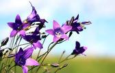 Summer Wild Flowers — Stock Photo