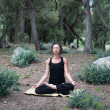 Foto Stock: YogIn Forest
