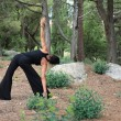 YogIn Forest — Stockfoto #11573384