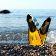 Flippers Near Sea — Stock Photo