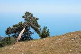 Tall på berg — Stockfoto