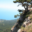 Pine On The Rock — Foto Stock