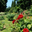 Stock Photo: Roses In Park