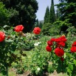 Roses In Park — Stock Photo #12319086