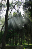 Sunbeams In Forest — Stock Photo