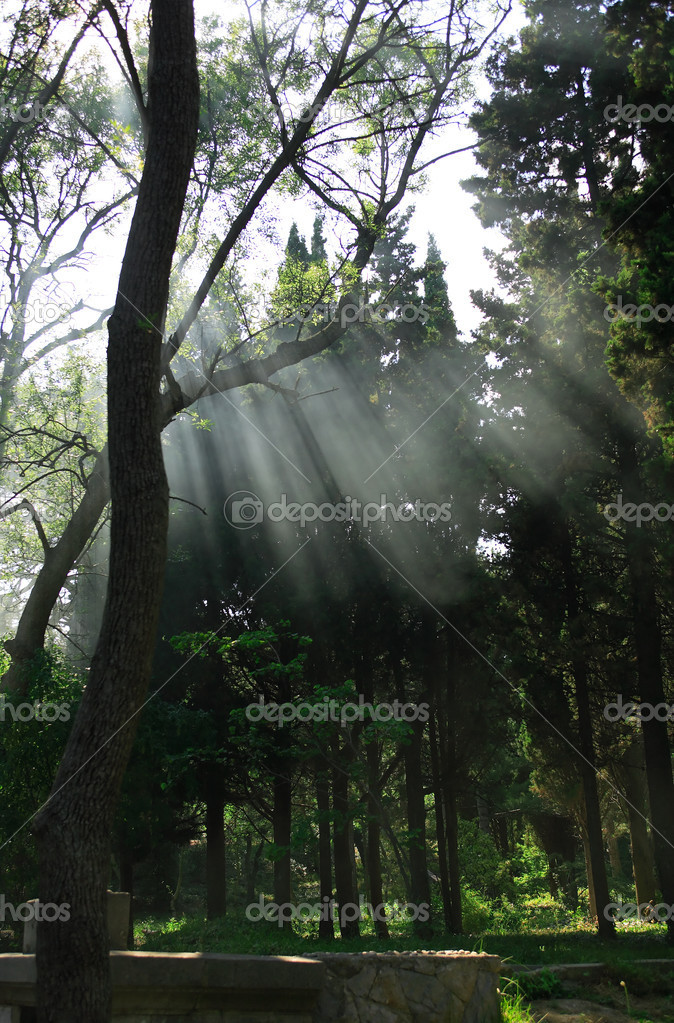 Summer park with few sunbeams between trees — Stock Photo #12360907
