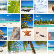 Caribbean collage — Stock Photo #11018761