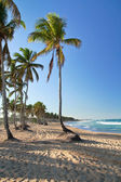 Tropical beach of Atlantic ocean with palms — Stock Photo