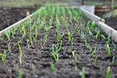 Garden beds — Stock Photo
