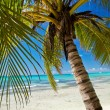 A beautiful image of palm on caribbean beach — Stock Photo