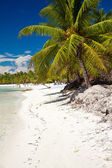 A beautiful image of caribbean beach — Stock Photo