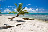 A beautiful image of caribbean paradise — Stock Photo