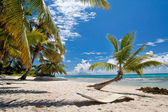 A beautiful image of caribbean paradise — Stock Photo