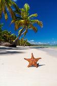 Estrella de mar en la playa del mar caribe con palmeras — Foto de Stock