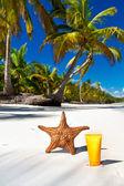 Estrella de mar y sanblock el tubo en costa del mar caribe — Foto de Stock