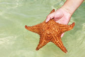 Estrella de mar en mano — Foto de Stock