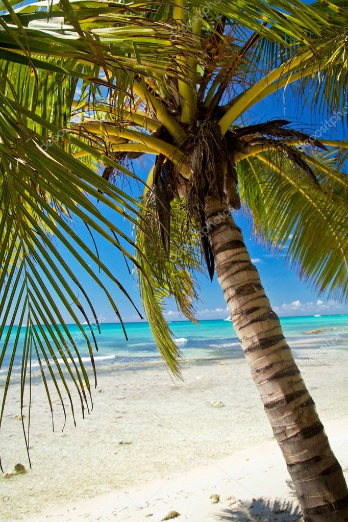 A beautiful image of palm on caribbean beach - Nature — Stock Photo #11975340
