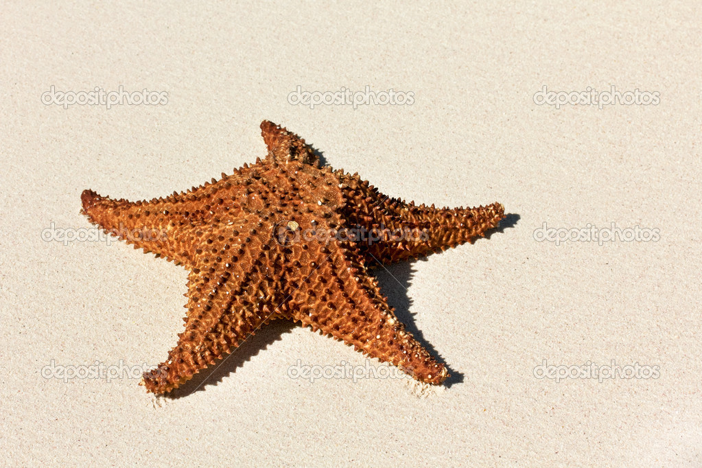 Starfish on a beach sand, closeup — Stock Photo #11975556