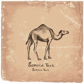 Camel art drawing — Stock Vector