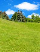 Wiese von frischem gras und bäume im hintergrund. — Stockfoto