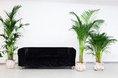 Black sofa in modern minimalism interior with green plants — Stock Photo