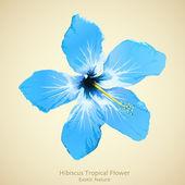 Hibiscus flower vector illustration. Tropical background design — Stock Vector
