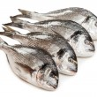 Stock Photo: Gilt-head fish food