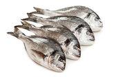 Gilt-head fish food — Stock Photo