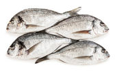 Gilthead fish food — Stock Photo