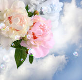 Peonies in the clouds — Stock Photo