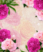 Grunge background with peonies — Stock Photo