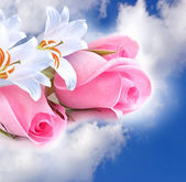 Pink roses and lilies in the clouds — Stock Photo