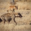 Hyena — Stock Photo