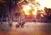 Elephants background — Stock Photo
