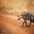 Hyena back view — Stock Photo