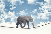 Elephant on rope — Stock Photo
