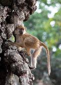 Baboon on tree — Stock Photo