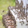Bees at hive. — Stock Photo