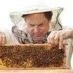 Beekeeper. — Stock Photo