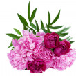 Peony bouquet. — Stock Photo