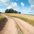 Road and wheat. - Stock Photo