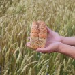 Bread in hands. — Stock Photo #11832101
