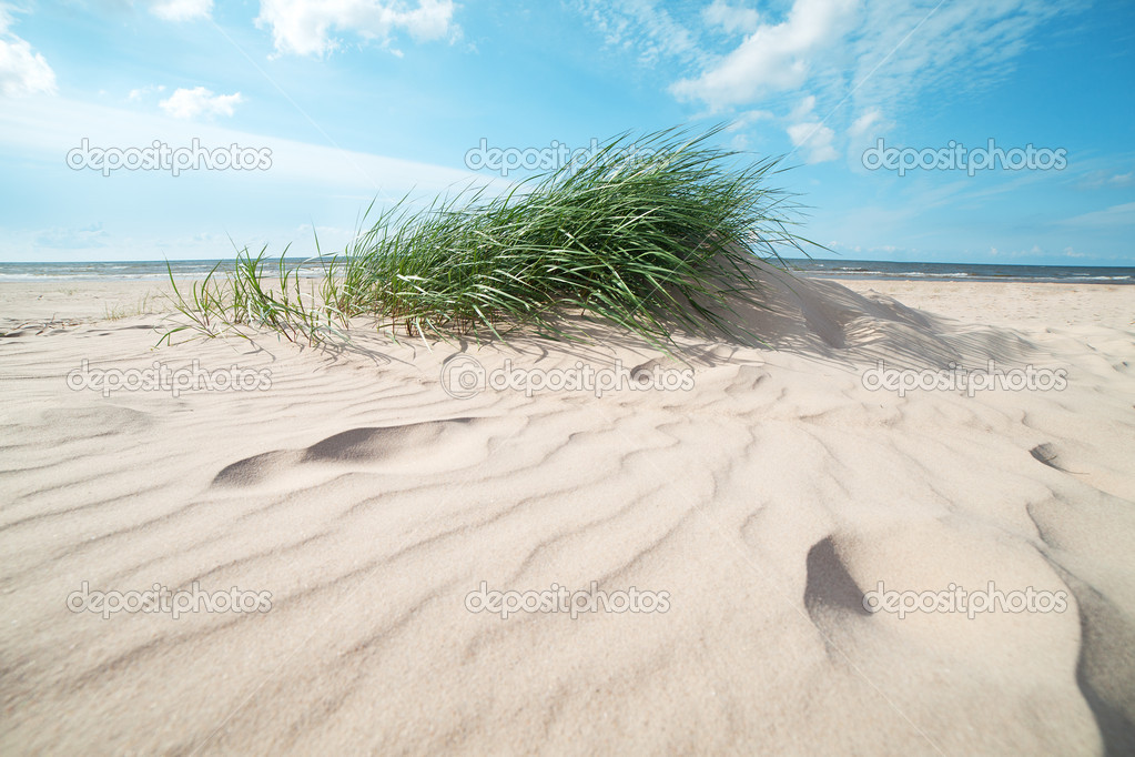 Green grass on sandy sea coast. — Stock Photo #11980233
